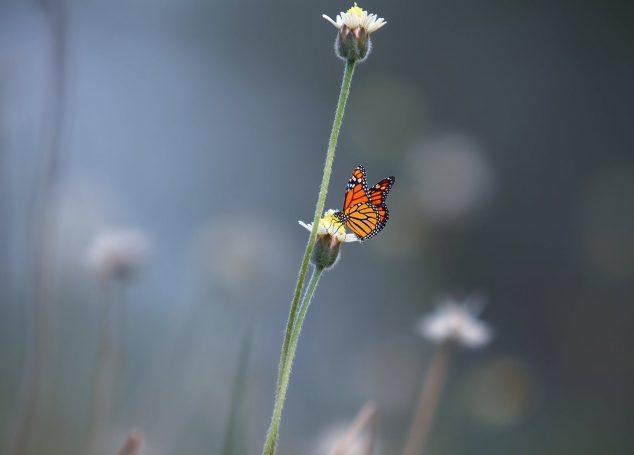 Papillons dans l'ventre